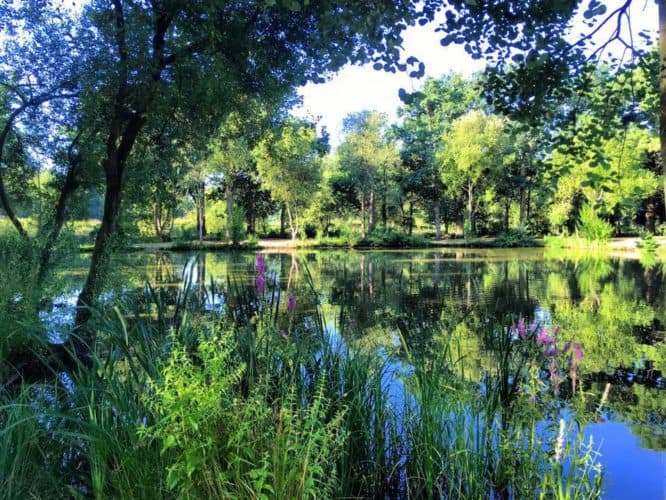 Pondwood (6)