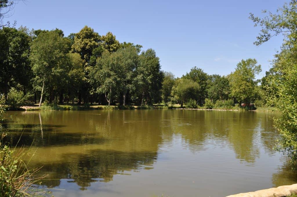Lake 2 (4)