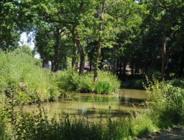 Woodland Lake 4